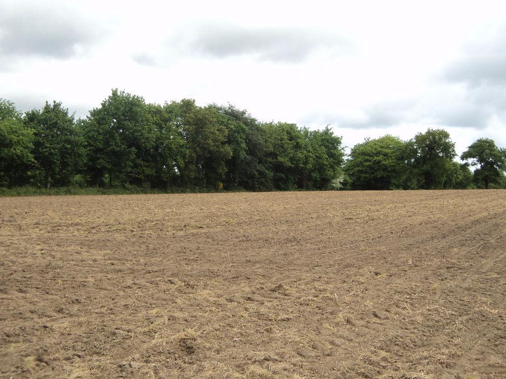 LANESTER Terrain Agricole 8000 m²