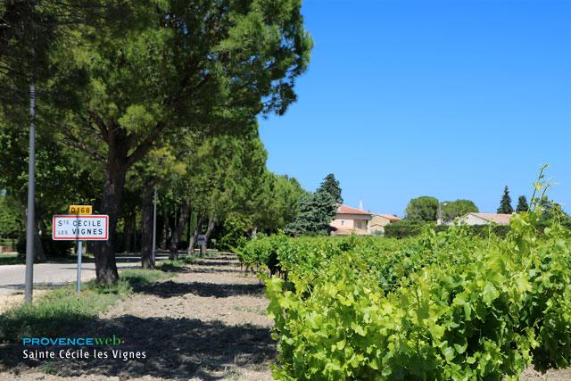 Fonds de commerce Sainte Cecile Les Vignes 2 pièce(s) 30 m2