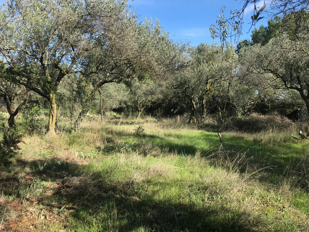 Terrain Serignan Du Comtat 552 m2