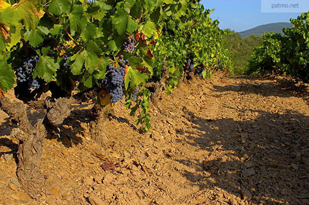 Parcelles de vignes GARD