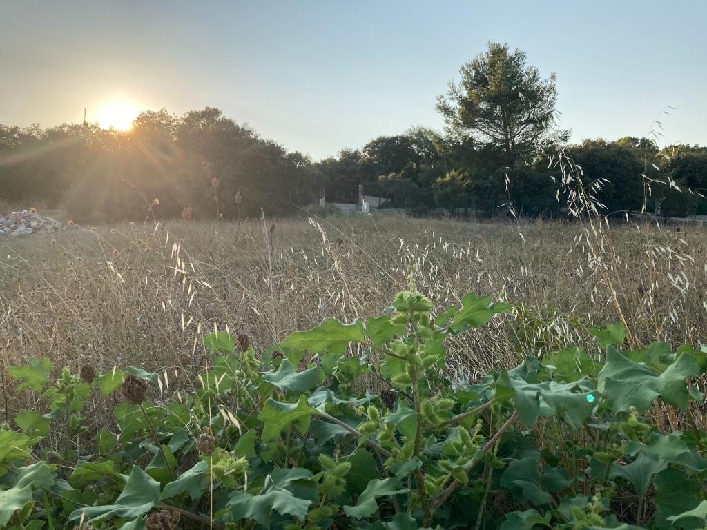 A Lagarde-Pareol très joli terrain plat de 915 m2 constructible et viabilisé Annie 0668368774