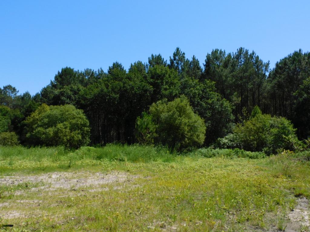 A vendre, terrain sur la commune de SAINT MICHEL ESCALUS