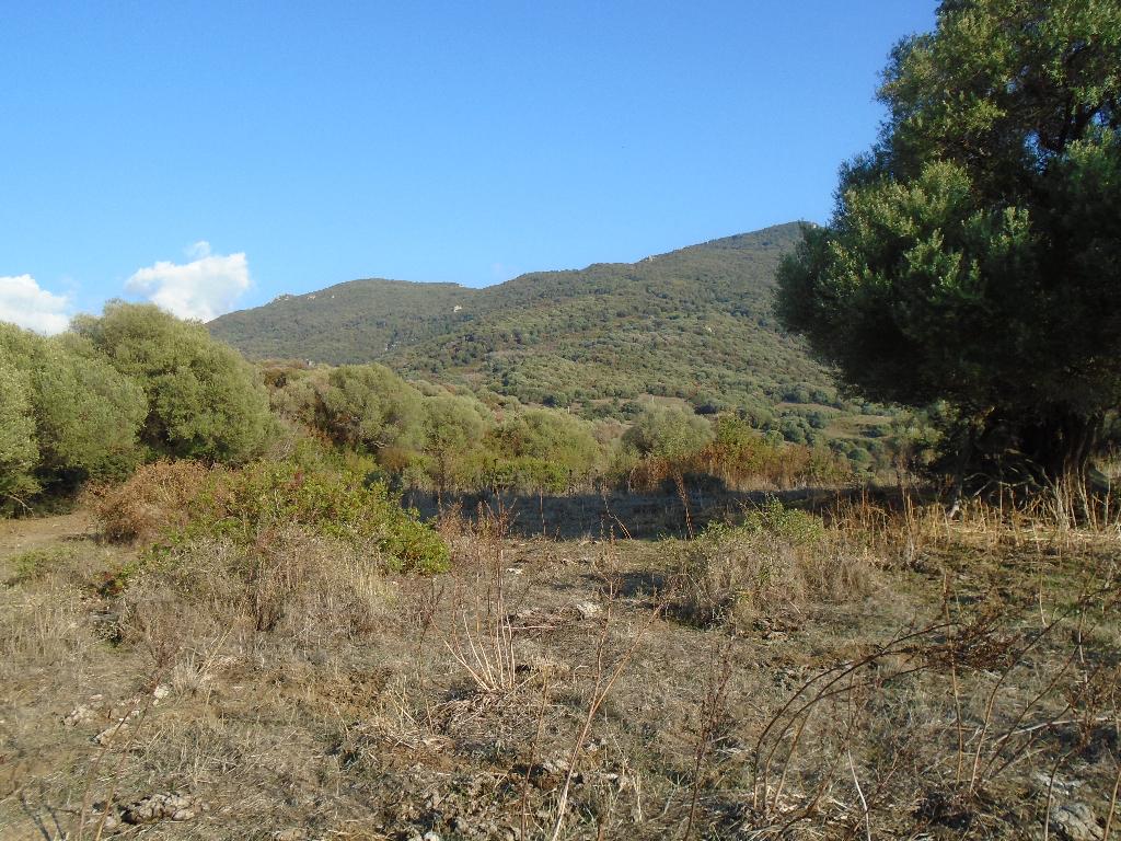 Terrain Sollacaro 58000 m2