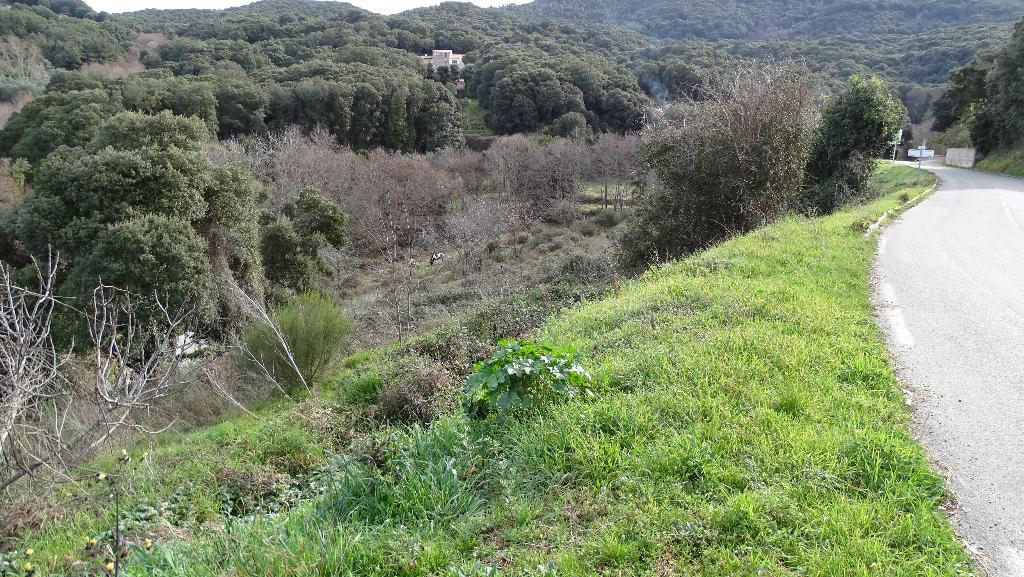 Terrain Petreto Bicchisano 1778 m2