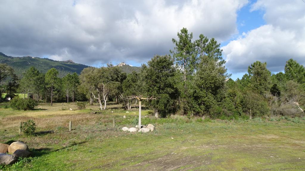 Terrain San Gavino Di Carbini 10000 m2
