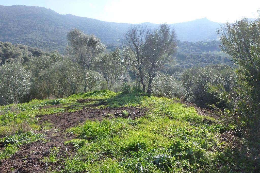 Domaine agricole FILITOSA