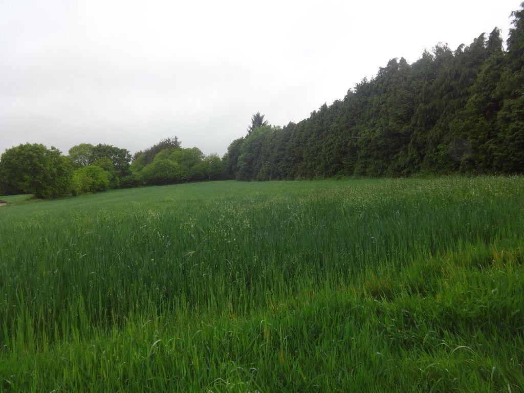 Parcelle de terrain agricole de 7900m² en sortie de village
