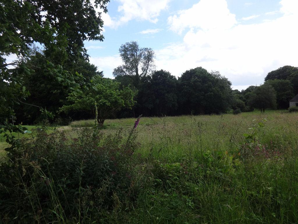Beau terrain constructible plat  de 5016m²  avec arbres en limite