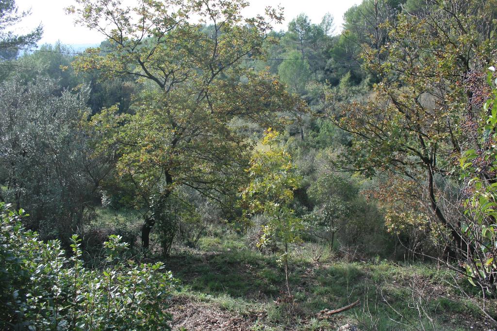 Exclusivité Draguignan quartier calme et résidentiel terrain de 4000m avec vue dégagée pas de vis à vis possibilité construire 200m fosse sceptique prévoir terrassement 139100€ crn1933