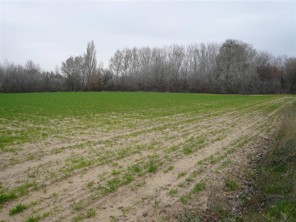 Terre agricole nue de 0,84 ha