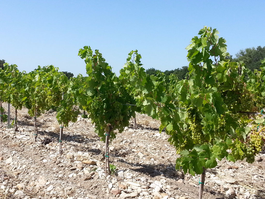 Plantier AOC Côtes du Rhône 4 ans de 1,46 ha