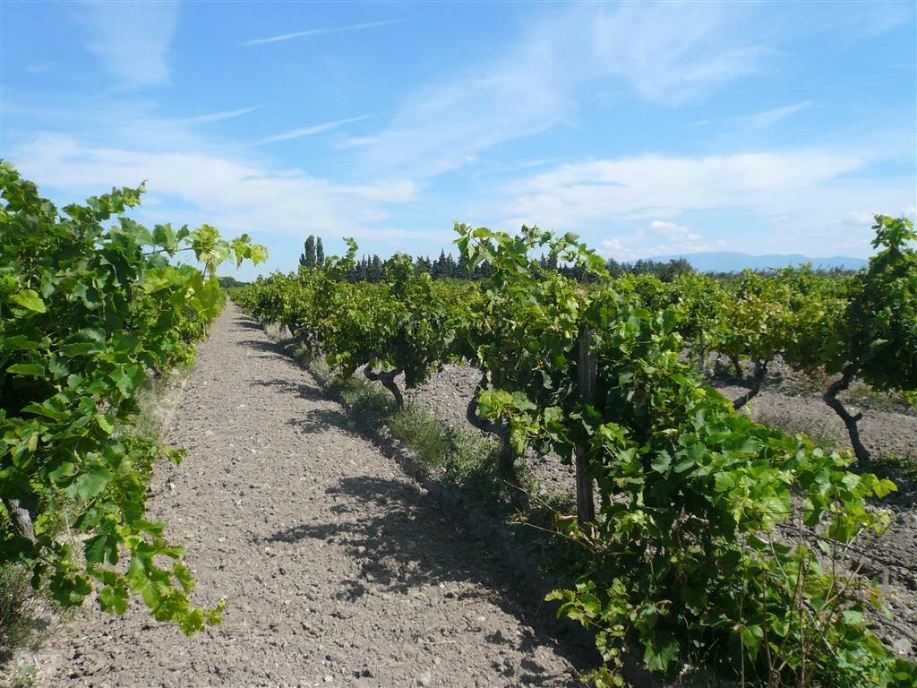 Parcelles de vigne de 0,66 ha