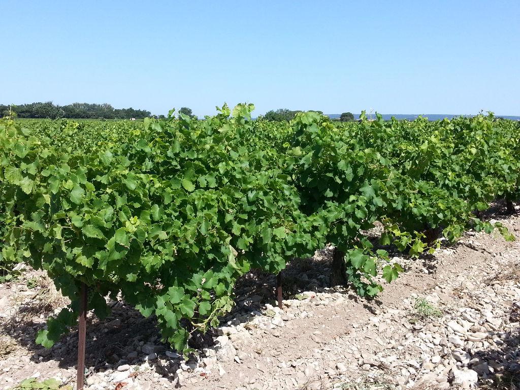 Parcelle de vigne en AOC Côte du Rhône