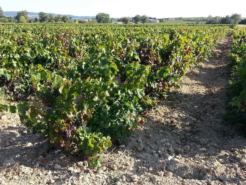 Parcelle de vigne de 45, 6 ares