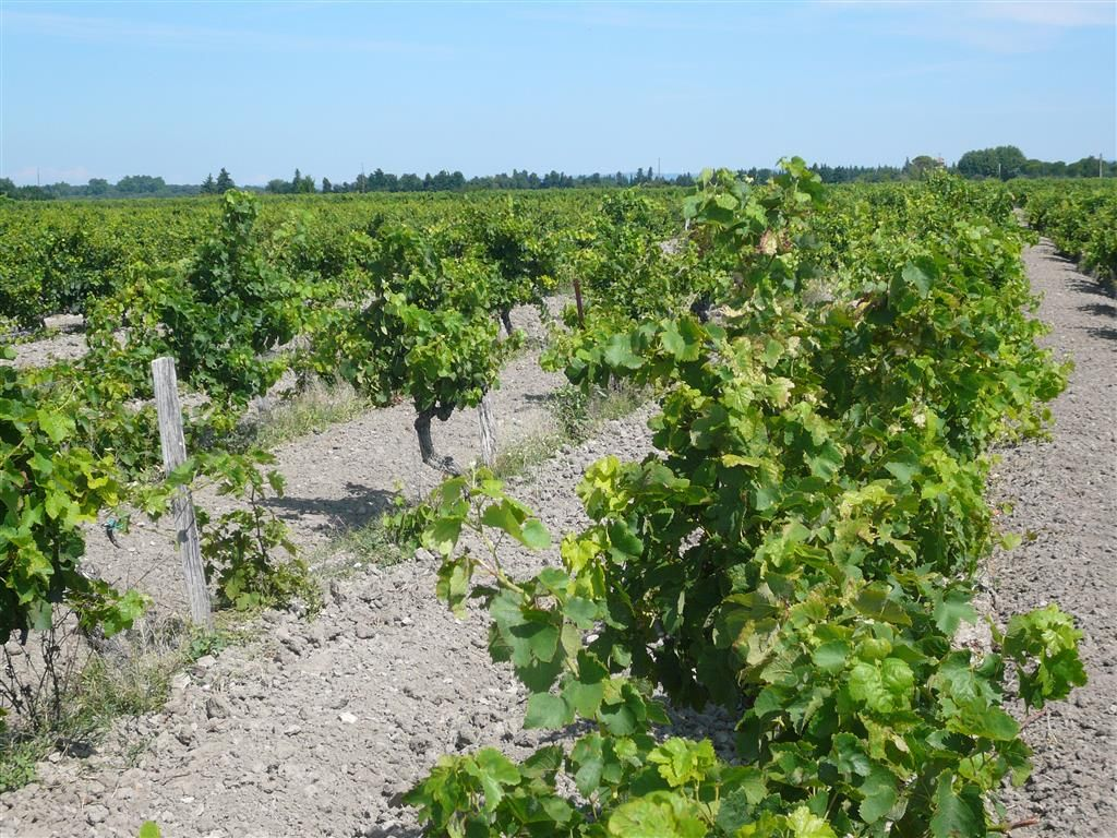 Parcelles de vigne de 54,4 ares en AOC Côtes du Rhône