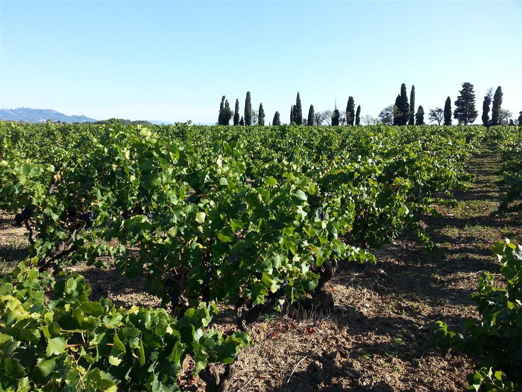 Vignoble  de 3,17 ha en appellation AOC Côte du Rhône