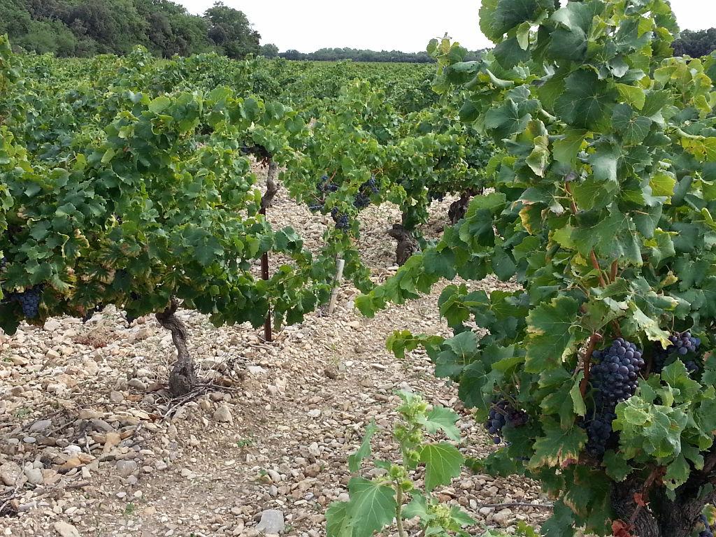 Deux parcelles de vignes en AOC côtes du Rhône