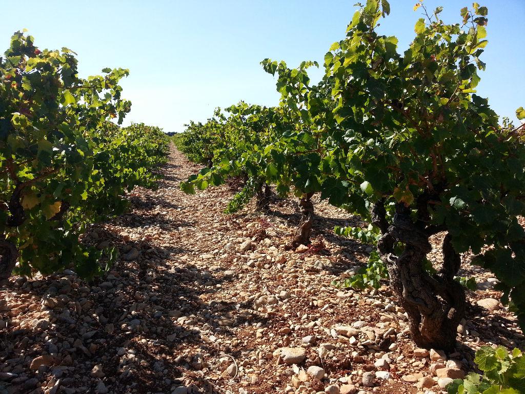 Très belle parcelle de vigne de 2,3 ha en AOC côte du Rhône village