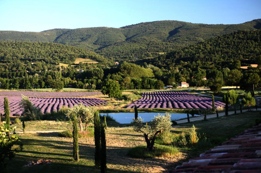 Luberon, magnifique hameau rénové sur 10 ha de terres dont 5 ha de lavandes, vue superbe...