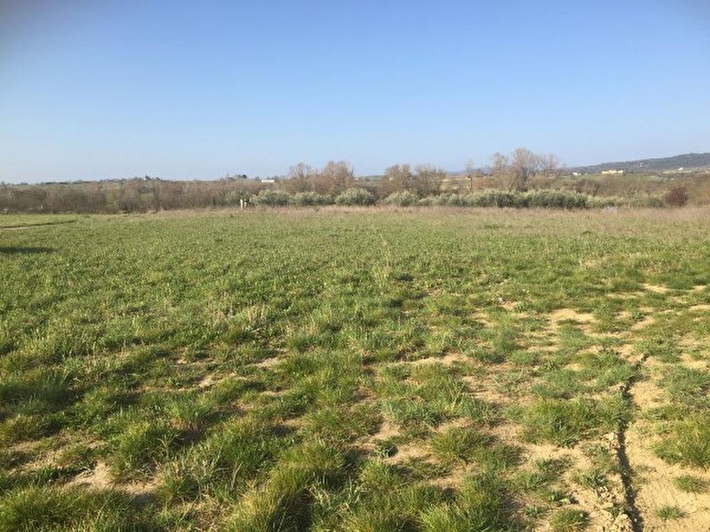 Terrain plat à la campagne
