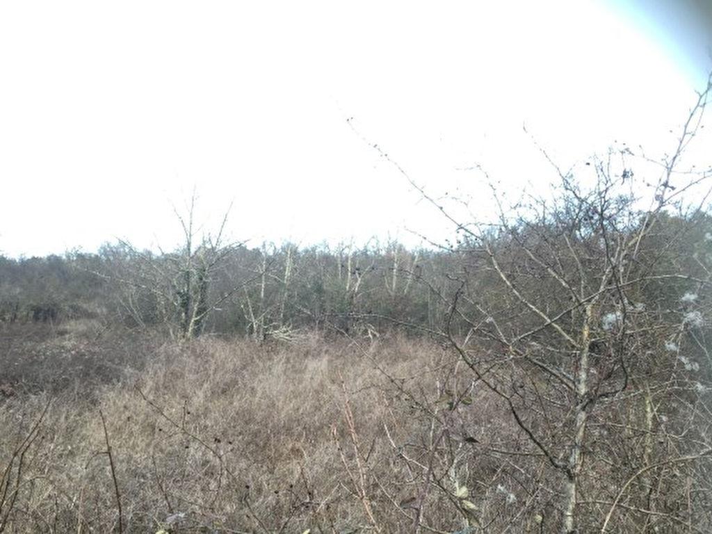 Terrain avec vue domaine de 2400 m² environ