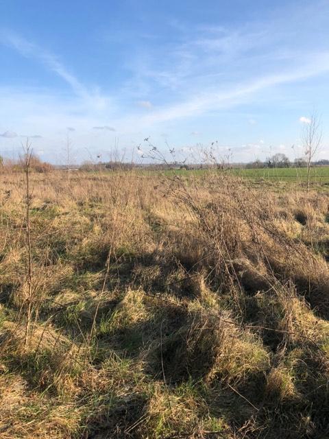 Terrain Quievrechain a la limite de Rombies-et-Marchipont 1780 m2