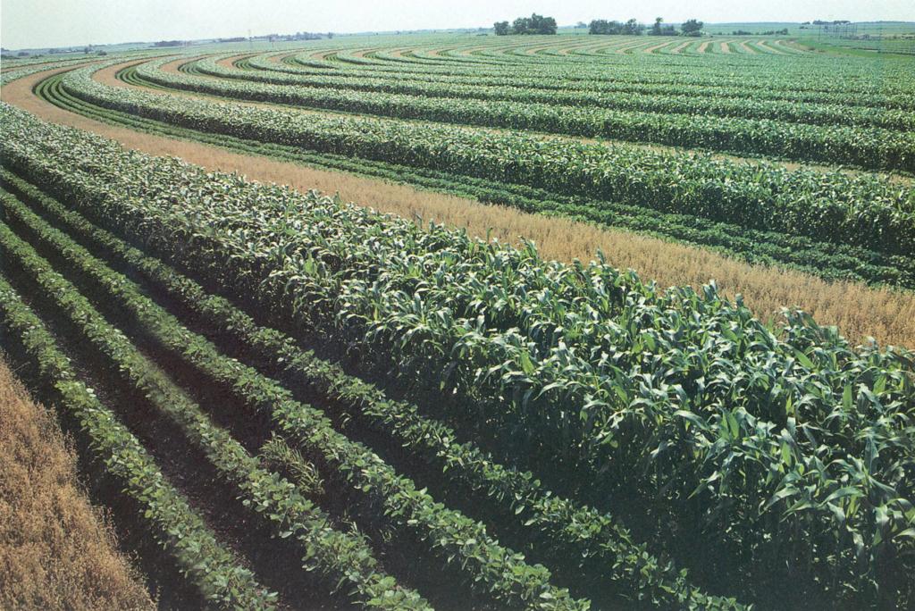DPT 28 A louer 27 HA terre agricole sur deux parcelles