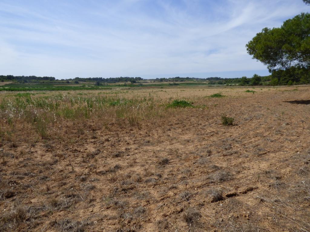 Terrain  agricole 9176 m2